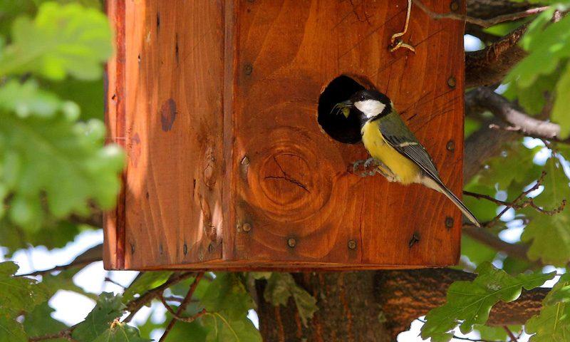 Cajas nido para aves y murciélagos, insectos, control biológico de plagas